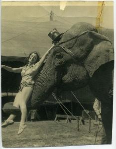 trixie elephant 2