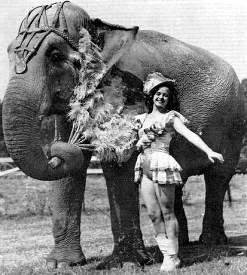 trixie elephant